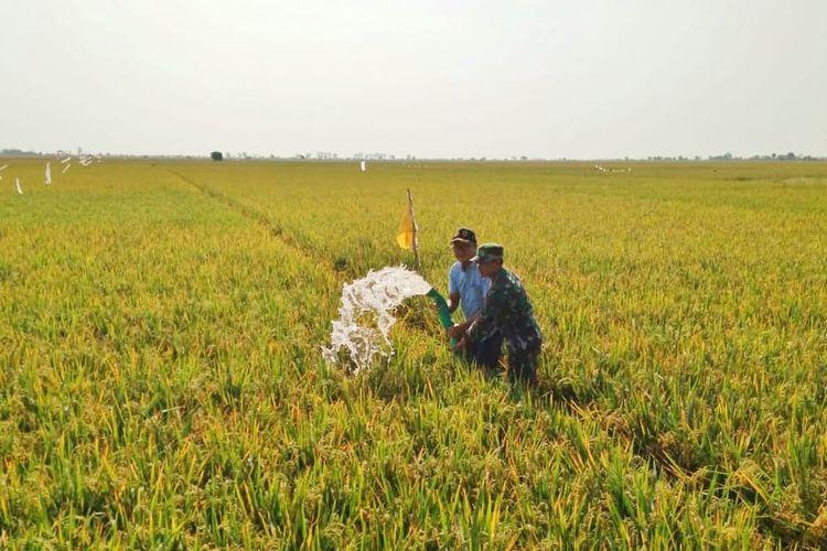 Mengatasi musim kemarau yang diprediksi mengalami puncaknya bulan Agustus dan September 2018 ini, Kementerian Pertanian telah melakukan langkah antisipatif untuk tetap menjaga produksi padi nasional