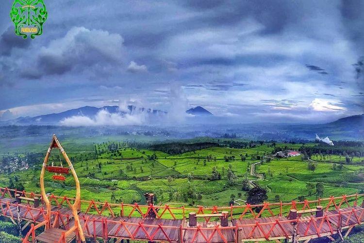 Pemandangan di sekitar Wayang Windu Panenjoan dengan hamparan kebun teh yang luas dan kabut tipis