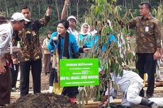 Iriana Jokowi Tanam Durian di