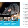 [POPULER TREN] Cara Usir Tikus dari Plafon Rumah | Yang Terjadi jika Konsumsi Jahe Setiap Hari