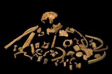DNA Manusia Tertua di Dunia Ditemukan pada Potongan Gigi Kanibal