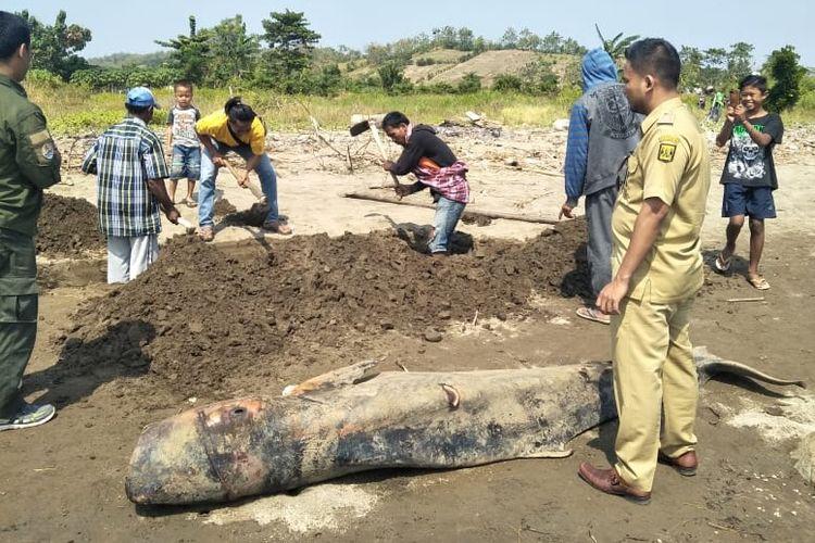 Proses penguburan bangkai paus di pantai Cikadal, Desa Mandrajaya, Kecamatan Ciemas, Sukabumi, Jawa Barat, Selasa (25/6/2019).