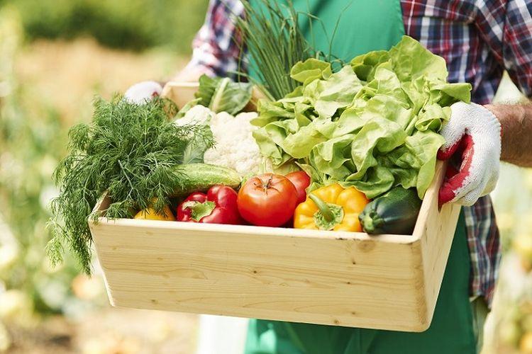Ilustrasi sayur-sayuran.