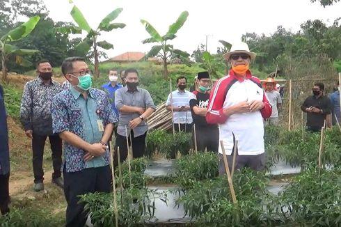 Gubernur Banten Minta Dinas Pertanian Tanam Cabe hingga Ketela untuk Pulihkan Ekonomi