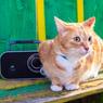 Kucing Juga Suka Dengar Musik, Benarkah?