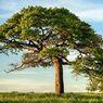 Penguburan Pohon, Trik Jepang Tangani Berkurangnya Lahan Permakaman