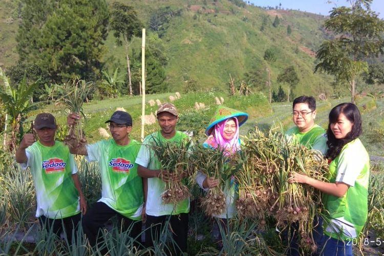 Kelompok tani Berkah Tani memanen bawang daun dan tomat yang ditanam dengan sistem multiple cropping di Desa Tuwel, Tegal, pada Rabu, 30 Mei 2018.