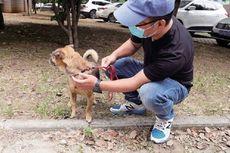 Anjing Setia Ini Terus Menunggu 3 Bulan, Meski Pemiliknya Meninggal karena Covid-19
