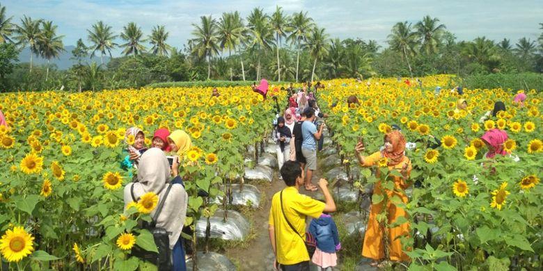 Taman Dewari di Dusun Kradenan Kalikuning, Desa Baturono, Kecamatan Salam, Kabupaten Magelang, Jawa Tengah, Jumat (16/2/2018).