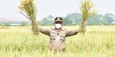 Punya Sistem Irigasi, Petani di Tabanan Tidak Takut Gagal Panen Akibat Kemarau