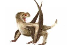 Punya 4 Jenis Bulu, Ini Rupa Asli Reptil Purba Pterosaurus