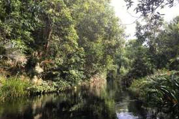 Taman Nasional Sebangay merupakan lahan hutan gambut yang dilalui beberapa sungai, salah satunya Sungai Koran yang berair hitam. Warna ini bukanlah hasil limbah, melainkan zat tannin yang ada di dalam rawa gambut.