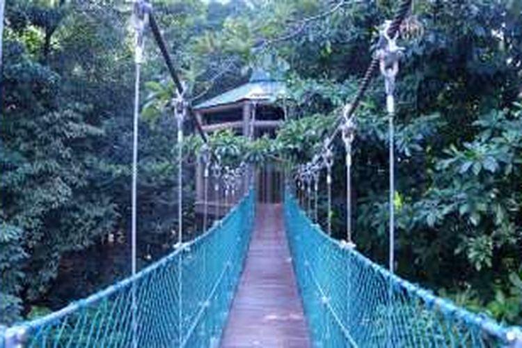 Kanopi dk KL Forest Eco Park