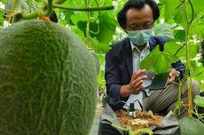 UB Kembangkan Teknologi Budidaya Melon, Menyiram Otomatis Sesuai Kebutuhan Nutrisi
