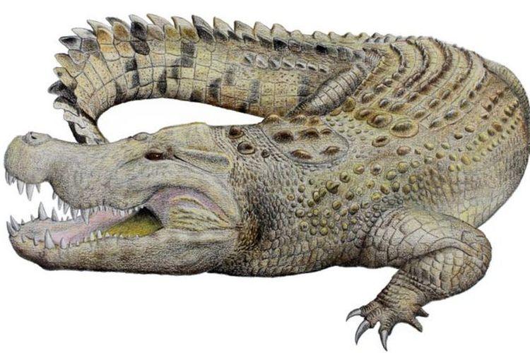 Berusia 8 juta tahun, ini perkiraan bentuk buaya yang sudah punah di Australia.
