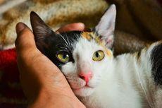4 Alasan Kenapa Kucing Tidak Mau Makan dan Solusinya