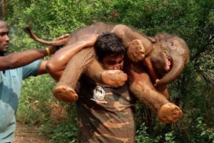 Palanichamy Sarathkumar menjadi viral setelah dia membopong seekor anak gajah di punggungnya yang terjerembab di sebuah parit 12 Desember lalu.