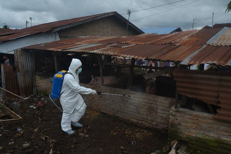Seorang petugas menyemprotkan desinfektan ke kandang ternak babi di Desa Sei Belutu, Kecamatan Sei Bamban, Serdang Bedagai, beberapa waktu lalu. Tercatat hingga 22 November 2019, sebanyak 10.298 ekor babi mati di 16 kabupaten di Sumut. Bertambah dari sebelumnya, pada 5 November 2019 yang lalu, sebanyak 5.800 ekor babi mati di 11 kabupaten.