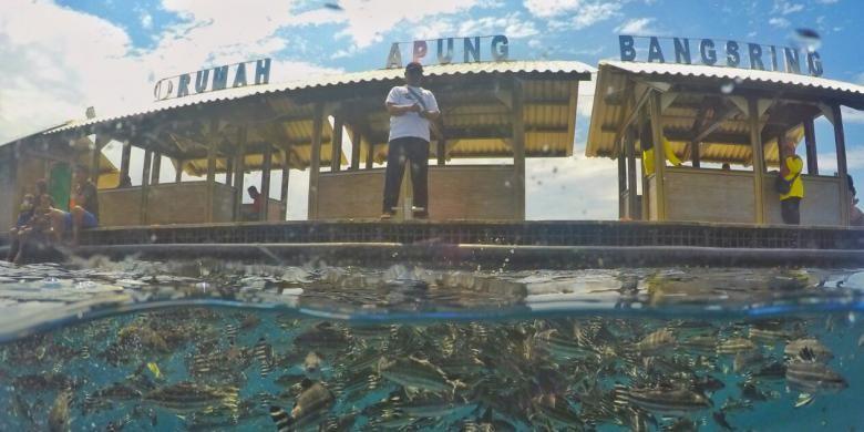 Rumah Apung Bunder Bangsring Underwater, salah satu destinasi wisata baru di Banyuwangi, Jawa Timur.