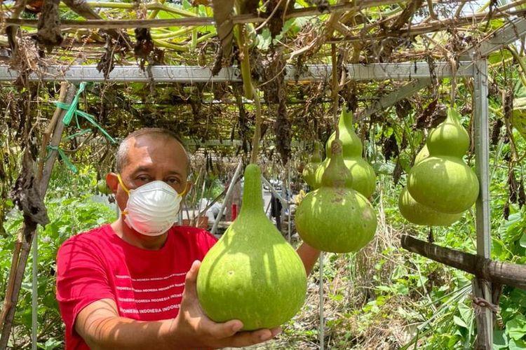 Calon Wakil Wali Kota Surabaya terpilih, Armuji, menjalani aktivitas sehari-hari dengaj berkebun di samping rumahnya di kawasan Penjaringan, Surabaya, Jawa Timur.