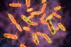 Tipes Menular Lewat Tinja, Bagaimana Mekanisme Infeksi Bakterinya?