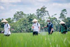 Petani Jember Ciptakan Pestisida Cair Berbahan Alami, Mampu Basmi Hama