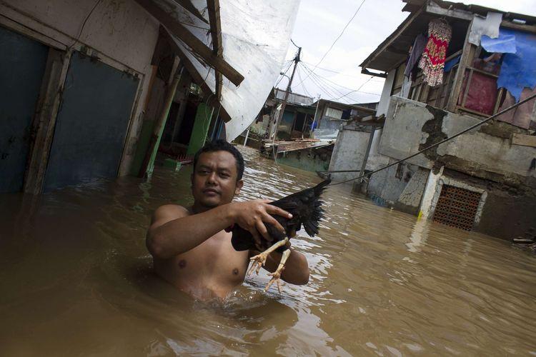 Sejumlah warga mengevakusi ayam peliharaannya dari genangan banjir yang merendam wilayah Pejaten Timur, Pasar Minggu, Jakarta Selatan, Sabtu (8/2/2020). Luapan air kali ciliwung tersebut merendam pemukiman padat penduduk hingga ketinggian 2 meter.
