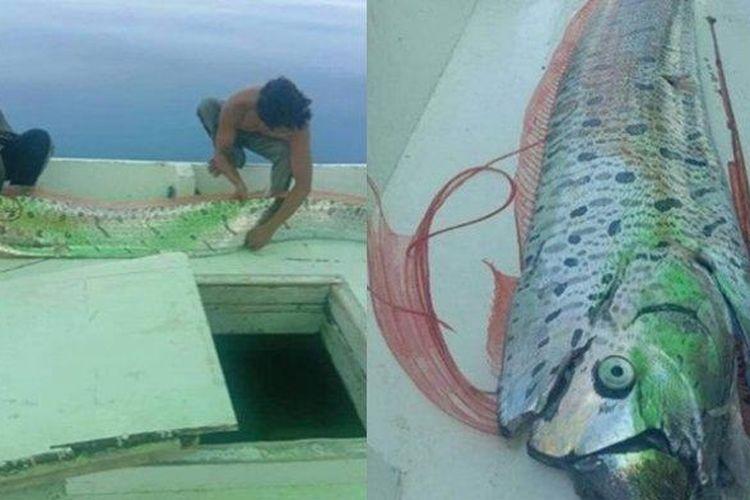Oarfish yang muncul ke permukaan laut di Kepulauan Selayar, Sulawesi Selatan.