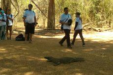 TN Komodo Dibuka 15 Agustus, Siap Terima Kunjungan Wisatawan Domestik dan Asing