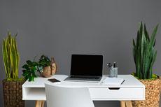 Ide Dekorasi Ruangan dengan Tanaman Hias Indoor