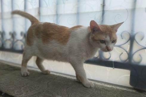 Waspadai, Cakaran dan Gigitan Kucing Bisa Sebabkan Infeksi Berbahaya