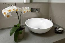 7 Tanaman Air yang Cocok untuk Dekorasi Rumah