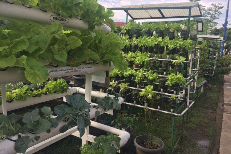 Supermarket dan Hotel Mulai Lirik Hasil Urban Farming di Kelurahan ...