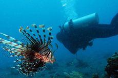 Di Teluk Ambon, Carol Marie Menghilang...