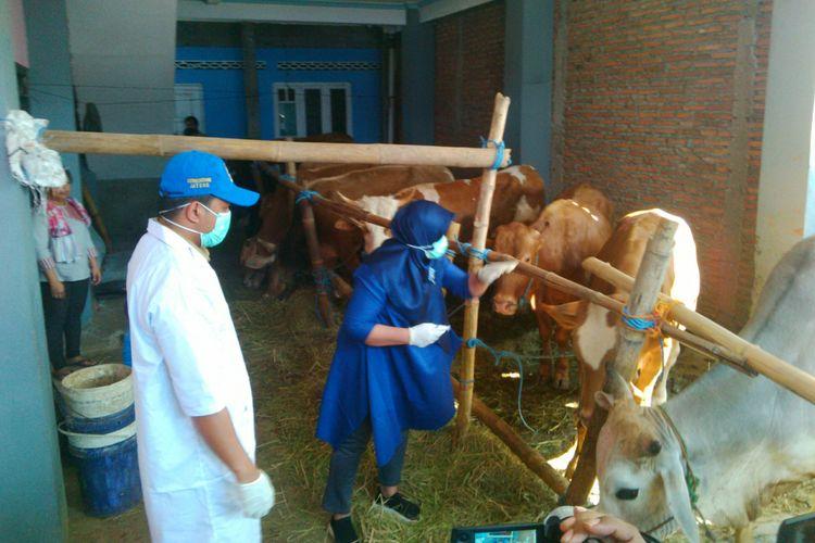 Dinas Pertanian, Ketahanan Pangan, dan Perikanan Kota Surakarta memeriksa sapi yang dijual di lokasi penjualan hewan kurban di Kelurahan Pajang, Kecamatan Laweyan, Solo, Jawa Tengah, Senin (20/8/2018).
