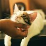 Bukan Ingin Dimanja, Ini Alasan Kucing Menggosok Kepala ke Pemiliknya
