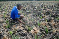 Kisah Petani di Desa Terpencil: Merantau ke Jakarta Saat Kemarau, Kembali Bertani Saat Penghujan