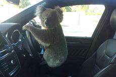 Gara-gara Koala, 5 Mobil Alami Kecelakaan di Jalan Tol