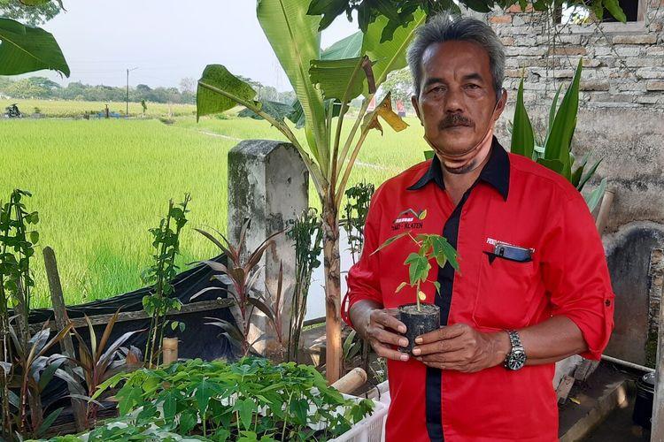 Thomas Sutana (53) menunjukkan bibit pepaya hasil pembibitan yang dilakukan kelompok Agro Bulan Lestari di Klaten, Jawa Tengah, Kamis (17/9/2020).