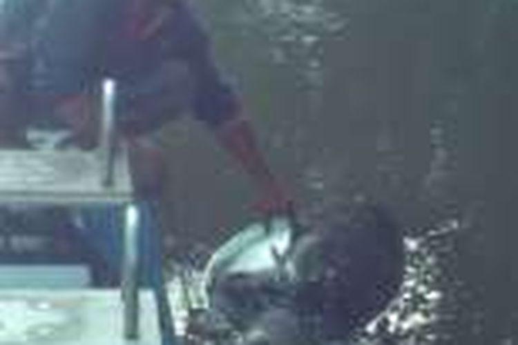 Basit mencoba memutus tali nilon jaring nelayan yang melilit kaki penyu di DAS Manggar.