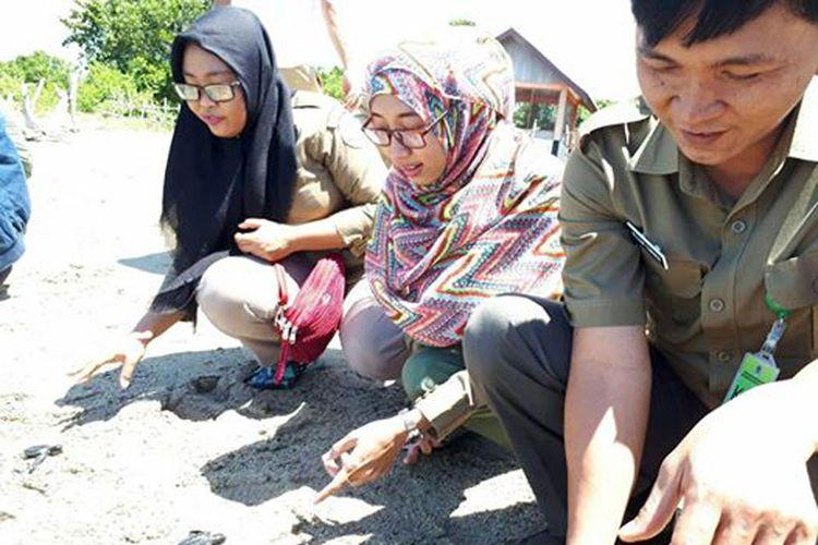 pelepasliara 70 ekor tukik penyu lekang dan 1 ekor penyu hijau di Pantai Tamboo Kawasan Cagar Alam Panua, Kabupaten Pohuwato
