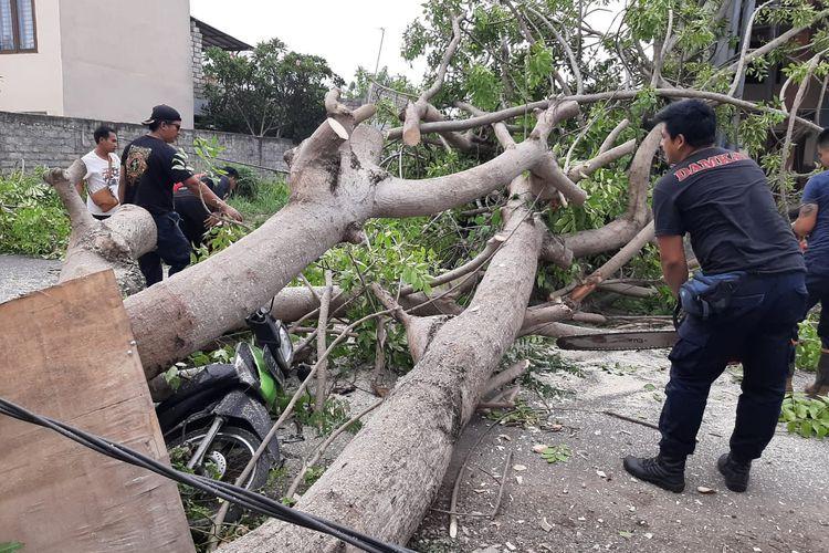 Penanganan pohon tumbang di Jalan Tukad Badung, Denpasar, Sabtu (4/1/2020).(Dok. BPBD Denpasar)