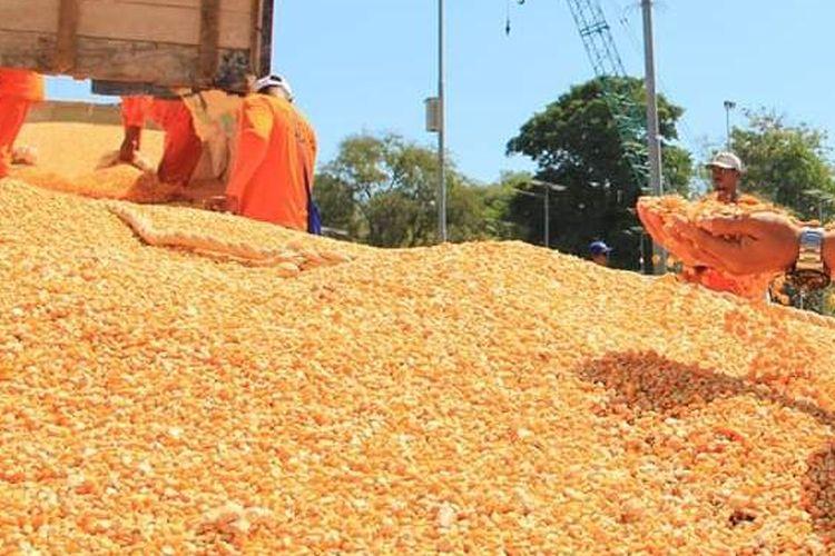 Pengamat Ekonomi Politik Pertanian Universitas Trilogi Muhammad Karim menegaskan pada 2017 tidak ada impor jagung pakan ternak, bahkan selanjutnya 2018 sudah ekspor 340 ribu ton.