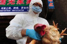 Flu Burung Merebak di Hunan, Tak Jauh dari Epicentrum Virus Corona di Wuhan