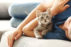 3 Ciri-ciri Kucing Kedinginan, Begini Cara Menghangatkannya