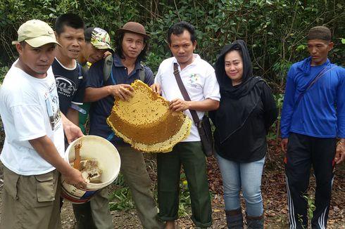 Kisah Petani Penghasil Madu Liar, Berburu Panen Sebelum Hujan Tiba (1)