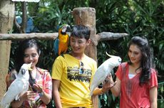7 Wahana The Jungle Bogor, dari Bird Park sampai Tower Slide