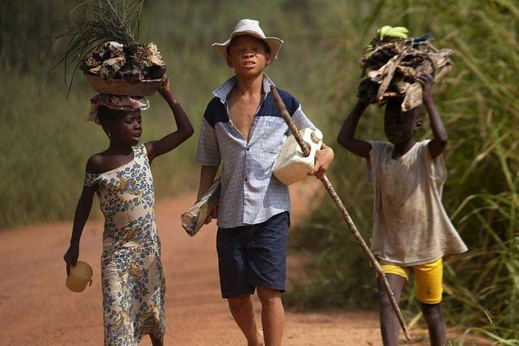 Pekerja anak di pertanan kakao.