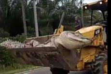 Ramai soal Buaya Raksasa di Bangka Belitung, Ini Penjelasan LIPI