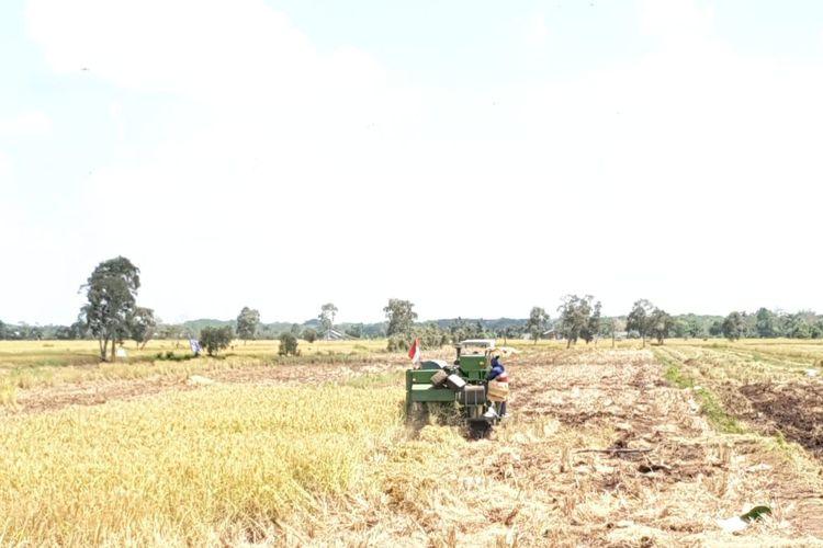 Ilustrasi sawah dan traktor